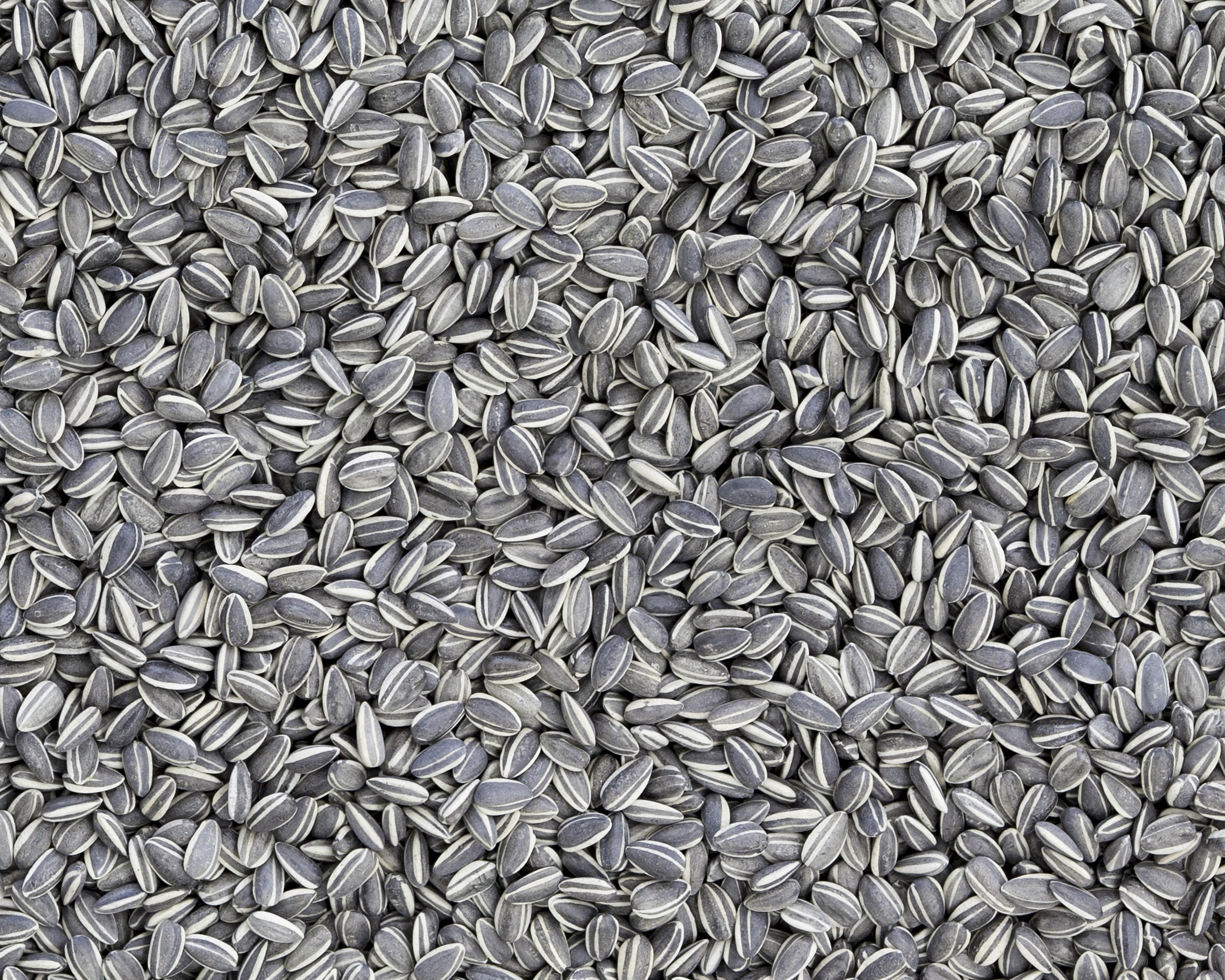 Sunflower Seeds, 2010.jpg